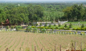 FARM FOR SALE IN MOCA
