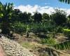 FARM FOR SALE IN MOCA